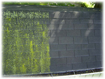 roof algae treatment and high pressure cleaning